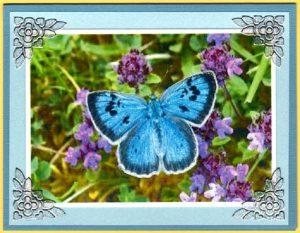 ButterflyAcetateCard7