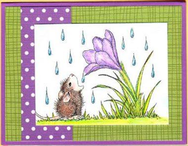 crocus raindrop