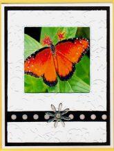 butterlfy frames