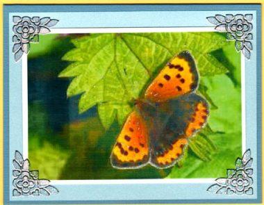 butterfly scenes