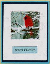 snowbirds acetate cards
