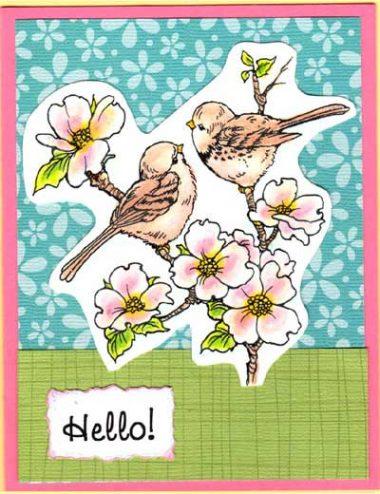 dogwood birds