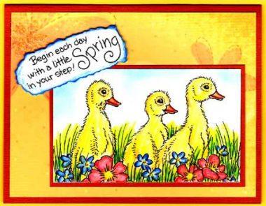 spring ducklinngs