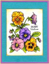pansies botanical