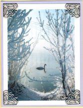 swan in winter
