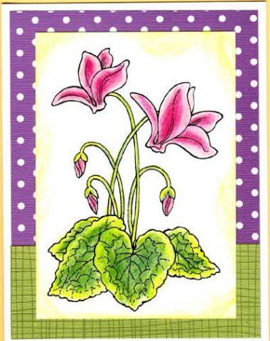 violet time
