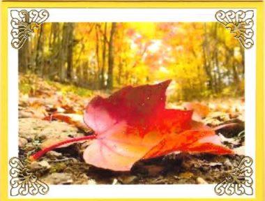 leaf perfection