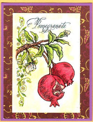 pomegranate botanical