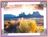 blooming desert serenity