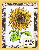 sweet sunflower