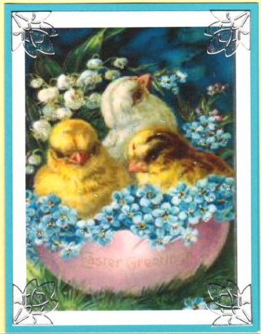 forget-me-not chicks