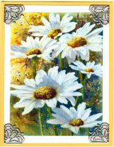 delightful daisies