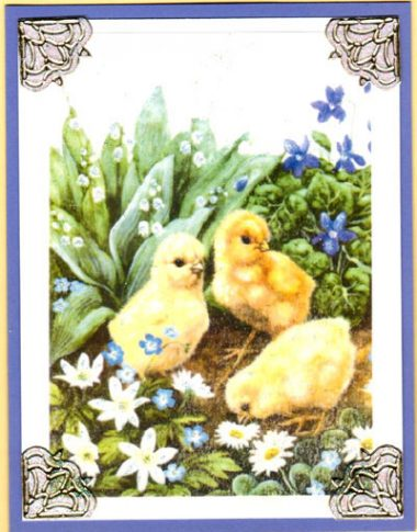 garden chicks