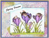 spring dreams