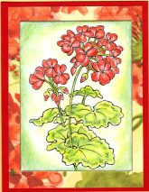 classic geranium