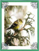 lilttle yellow bird